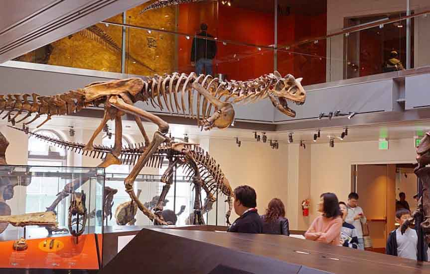 best places to visit in la: Natural History Museum