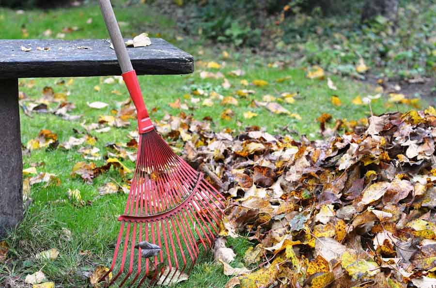 best eco friendly ways to remove leaves from the yard