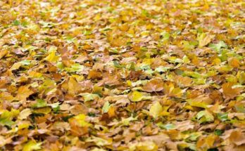 ways to use fall leaves for your garden